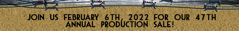 Frey Angus Ranch 38th Annual Production Sale - February 3, 2013