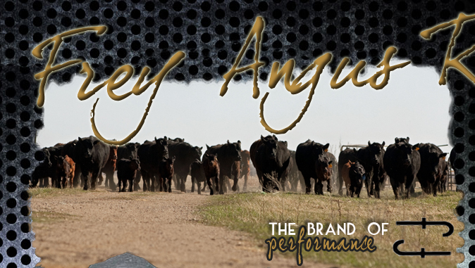 Frey Angus Ranch